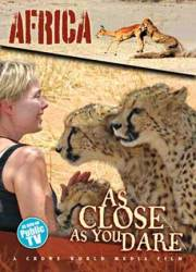 Becci Crowe at AfriCat with Cheetahs
