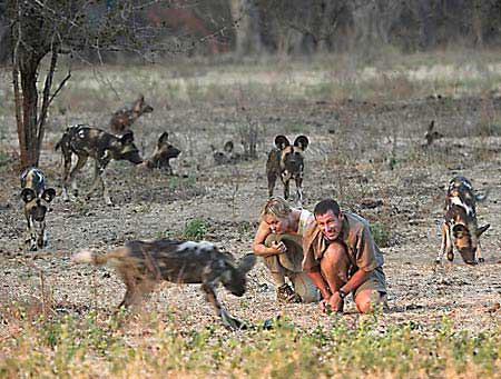 Becci with Painted Dogs in Africa